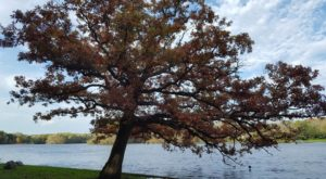 Fall tree. Photo by Mary Frei.